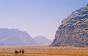 Beduin tribe members headed out across the Wadi Rum desert on camels - Jordan