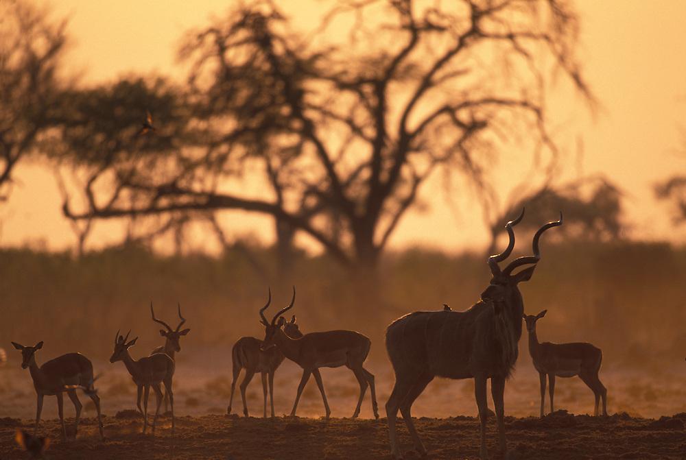 Africa, Botswana, Chobe National Park, Setting sun over lush banks of Chobe River near village of Kasane
