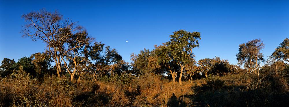 Botswana, Moremi Game Reserve, Setting sun lights mopane forest along Khwai River in Okanvango Delta as moon rises