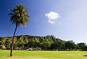 A single palm tree in front of Diamond Head Crater in Kapi'olani park in Waikiki