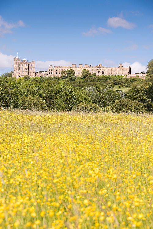 Bolsover, Derbyshire - Feb 09: Bolsover Castle viewed across fields of yellow rape flower on 09 Feb 2014 in Bolsover, Derbyshire, UK
