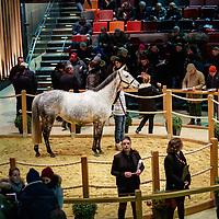 Arqana December Breeding Stock Sale, Deauville, 09/12/2017 photo: Zuzanna Lupa
