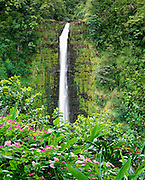 0860-1023D ~ Copyright: George H.H. Huey ~ Akaka Falls.  'Akaka' translates to 'split' or 'crack'.  This site is sacred to the Hawaiian god Kanaloa.  Traditionally all Hawaiian landscape features were considered sacred.  The Big Island, Hawaii.