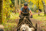 Matt Hodgson, World Champion in 4 dog freight class during the WSA Dryland World Championship 2019 at Firle Country Estate in the South Downs National Park, Lewes, Sussex, United Kingdom on 17 November 2019.