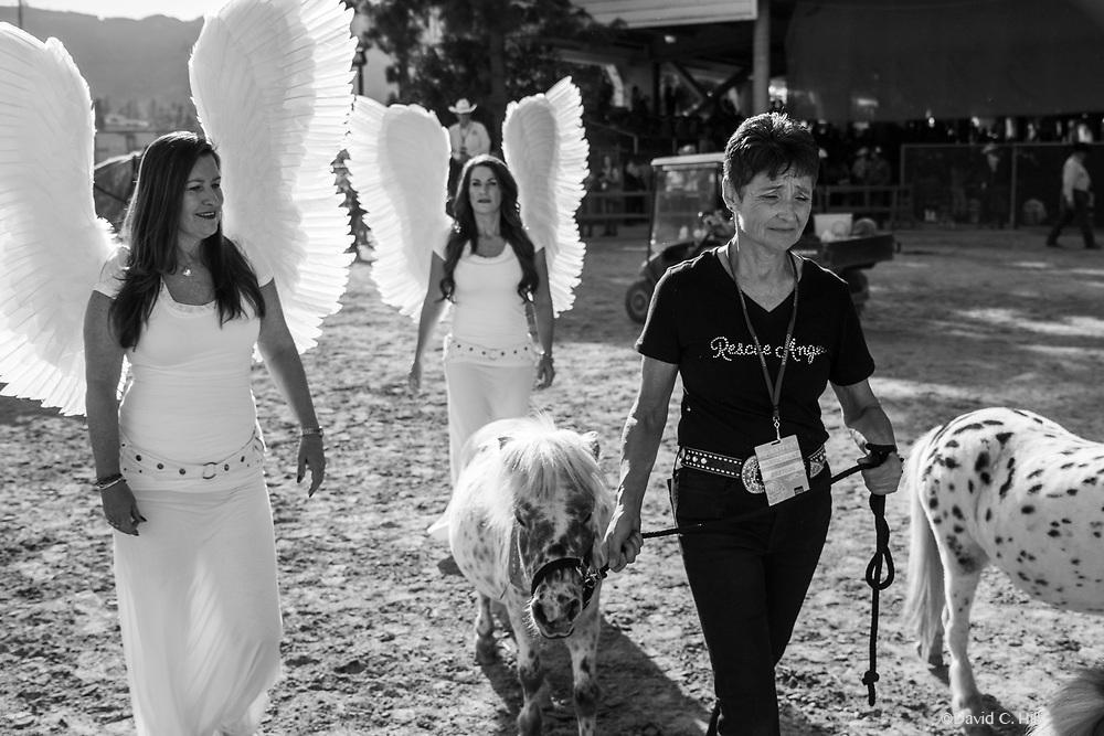 EQUESTFEST PRESENTED BY WELLS FARGO Tournament of Rose's Parade pre-event. Los Angeles Equestrian Center Burbank, California