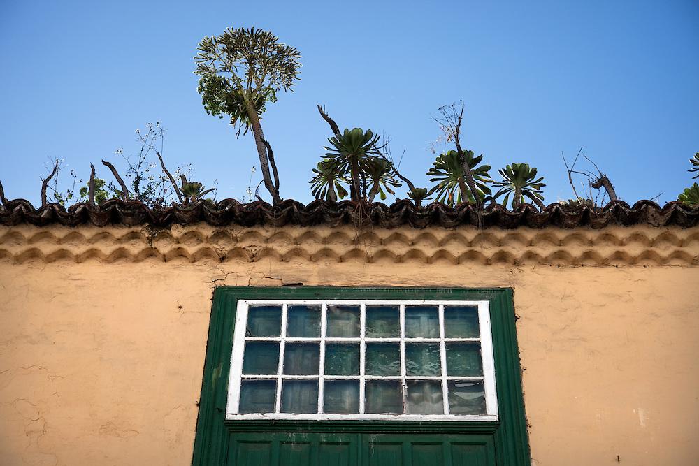 Plants growing on roofs in La Laguna, Tenerife.