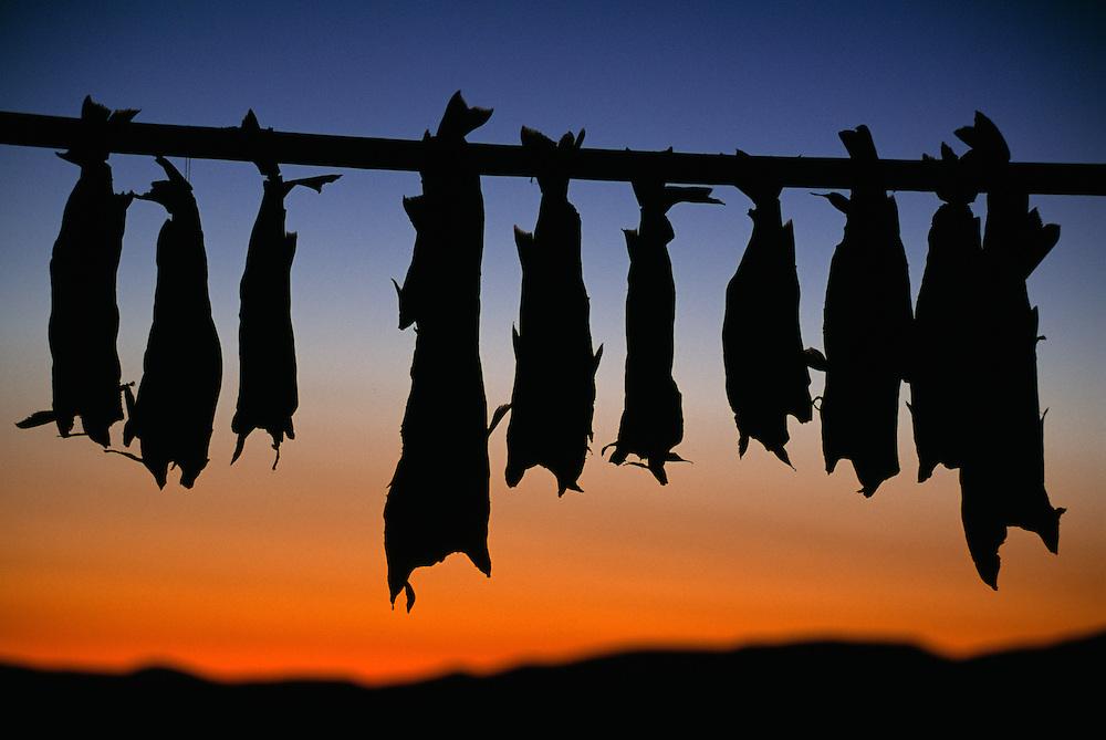 Drying salmon fish, Chukotka, Siberia, Russia