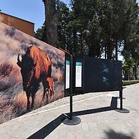 TOLUCA, México.- (Abril 11, 2019).- El Zoológico de Zacango presentó la exposición Fotográfica META 12 AICHI: Recuperando Especies En Riesgo en México Prioritarias de la CONANP, como parte del Programa de las Naciones Unidas para el Desarrollo (PNUD) en México y la Comisión Nacional de áreas Naturales Protegidas (CONANP) que trabajan para asegurar la conservación a largo plazo de la diversidad biológica del país, con esta exposición se busca  comunicar y sensibilizar al público sobre las especies amenazadas en el país, así como las medidas que se están tomando para su conservación. Agencia MVT / Crisanta Espinosa.