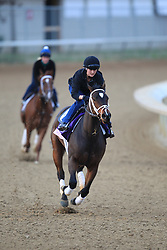 Breeder's Cup Morning workouts in preparation for Breeder's Cup 2011 at Churchill Downs in Louisville Thursday, Nov. 03, 2011. Photo by Jonathan Palmer