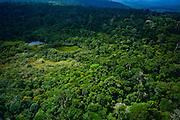 Parauapebas_PA, Brasil...Área preservada da Floresta Amazônica- Floresta Nacional de Carajas- Para..Preserved area of the Amazon Forest, National Forest of Carajas- Para..Foto: JOAO MARCOS ROSA / NITRO