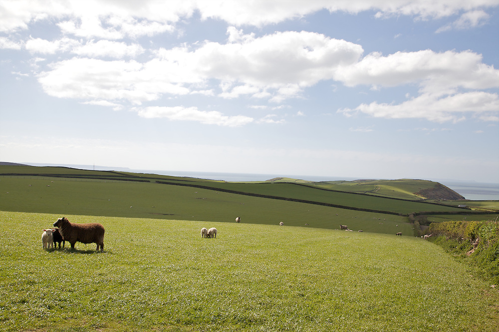 Fields outside Pickwell Manor, Georgeham, North Devon, UK.<br /> CREDIT: Vanessa Berberian for The Wall Street Journal<br /> HOUSESHARE