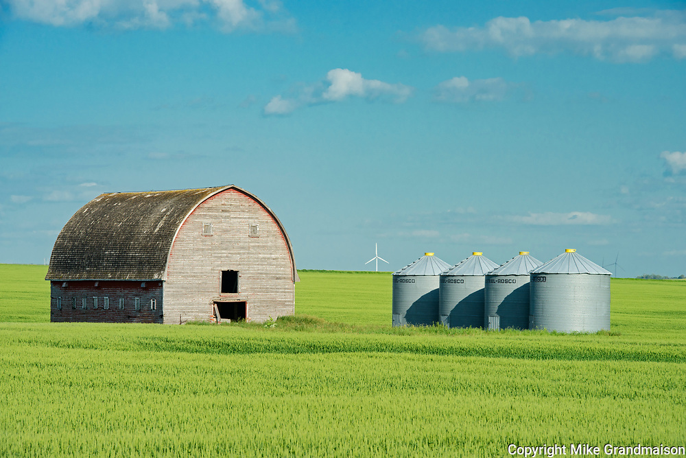 Barn, grain bins and canola crop<br />Swan Lake<br />Manitoba<br />Canada