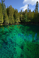 Large Trout can be seen in the crystal clear waters of Kitch-iti-kipi, Michigan's largest freshwater spring. Over 10,000 gallons a minute gush from fissures in the underlying limestone. The flow continues throughout the year at a constant 45 degree Fahrenheit.<br />