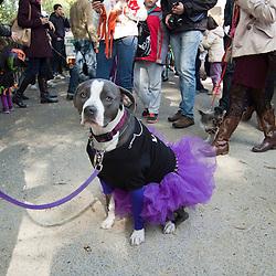 Dog Costume Parade