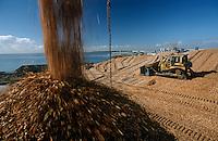 Plantation Eucalyptus (bluegum) trees being woodchipped for export