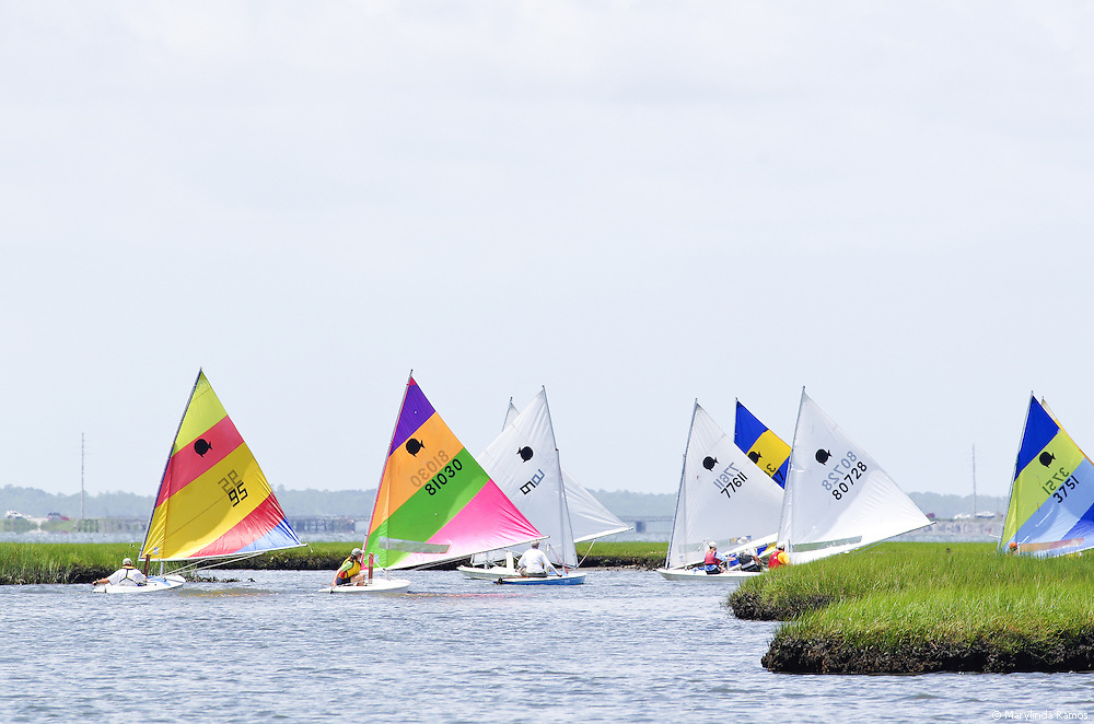 Following the leaders, the fleet threads its way through waterways lined in tall grass at the Harkers Island Regatta.
