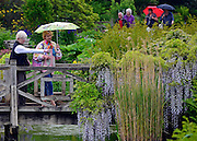 © Licensed to London News Pictures. 07/06/2013. Wisley, UK Two women look at the wisteria on a bridge during a sharp rain shower. People enjoy the warm weather at RHS Wisley in Surrey today 7th June 2013. Photo credit : Stephen Simpson/LNP