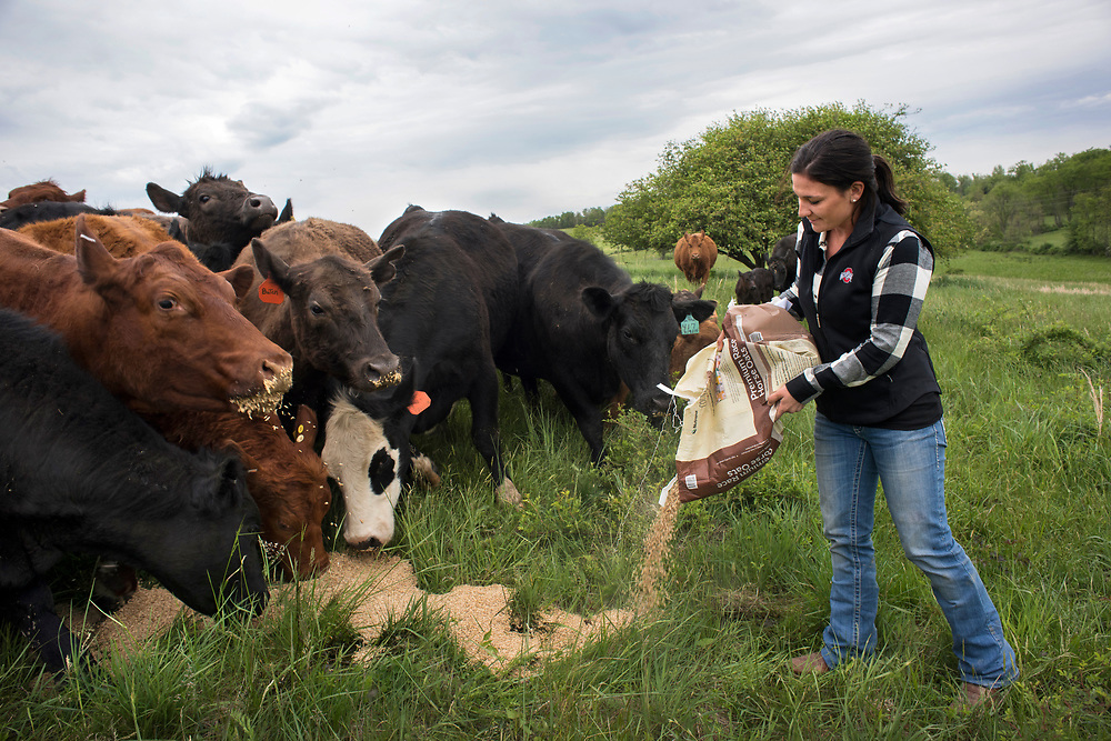 Jefferson Township, PA, May 4, 2017:  Pro golfer Rachel Rohanna distributes feed to some of the beef cattle she and her husband are raising in Greene County, PA. ( Martha Rial for espnW)