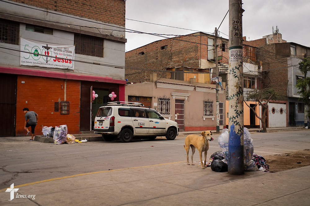 A street dog searches for food amongst trash outside the Castillo Fuerte mission site on Saturday, Nov. 4, 2017, in La Victoria district, Lima, Peru.  LCMS Communications/Erik M. Lunsford