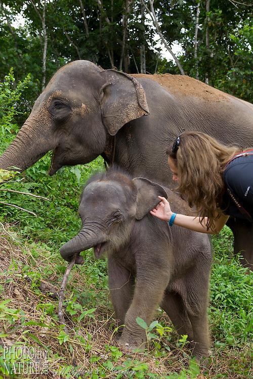 L'éléphant de Sumatra, Elephas maximus sumatranus, endémique des forêts de Sumatra, est une sous-espèce de l'éléphant d'Asie. L'éléphant de Sumatra est en voie d'extinction. Depuis 2011 Il a été placé par l'UICN sur la liste rouge des espèces menacées en tant qu'« espèce en danger critique ». La mission principale du CRU est la médiation des conflits entre éléphants sauvages et les communautés
