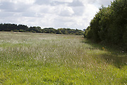 grass, field, meadow, farming, bog,