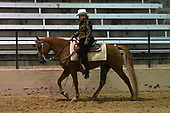 2017 TEXAS SPRING CLASSIC WALKING HORSE SHOW