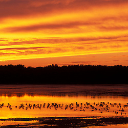 Sanibel, FL. Shorebirds and wading birds silhoutted against the colors of sunset at Ding Darling National Wildlife Refuge on Sanibel Island.