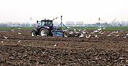 Nederland, Zevenaar, 22-11-2018En de boer hij ploegde voort. Boer is  bezig met zijn trekker de grond te bewerken. Foto: Flip Franssen