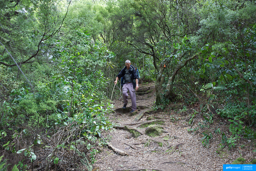 Walkers in the Te Urewera National Park on the Lake Waikaremoana Great Walk. .The remote, rugged, immense, Te Urewera National Park is famous for its lakes and forested beauty as well as its stormy history. In the southern part of the park lie two of the park's treasures, Lake Waikaremoana and the smaller Lake Waikareiti. .Te Urewera National Park lies between the Bay of Plenty and Hawke's Bay in the North Island of New Zealand.The nearest towns are Whakatane, Murupara and Wairoa. Te Urewera National Park, New Zealand. 18th January 2010. Photo Tim Clayton