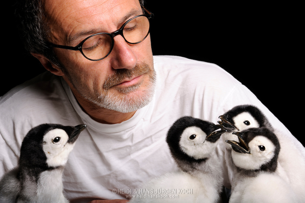 Chief taxidermist Juergen Fiebig, with three of his prepared Emperor penguin subadults (Aptenodytes forsteri), a rarity in the taxidermy, preparation department for the Museum of Natural History in Berlin..Chefpraeparator Juergen Fiebig, mit drei von ihm praeparierten Kaiserpinguin-Jungtieren (Aptenodytes forsteri), eine Raritaet in der Tierpraeparation, Praeparationsabteilung im Museum fuer Naturkunde Berlin