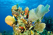 A healthy variety of soft and hard corals make a perfect home for reef fish and creatures.