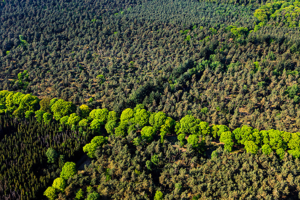 Nederland, Noord-Brabant, Gemeente Gemert-Bakel, 27-05-2013; Stippelberg. Oorspronkelijk uitgestrekt heidegebied in de Peel, ontgonnen door Heidemij tot bos en landbouwgrond, in een later stadium aanleg productiebos bestaande uit Grove den en Amerikaanse eik. Het ontginningsbos is in bezit is van Vereniging Natuurmonumenten.<br /> The Peel, originally vast moorland in, reclaimed by Heijdemij to woodland and farmland, at a later stage production forest .<br /> luchtfoto (toeslag op standard tarieven)<br /> aerial photo (additional fee required)<br /> copyright foto/photo Siebe Swart