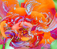 floral swirling  dynamic abstract image with moving shapes in dominant red orange tones
