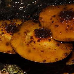 Te Urewera National Park, Mushroom, Unknown
