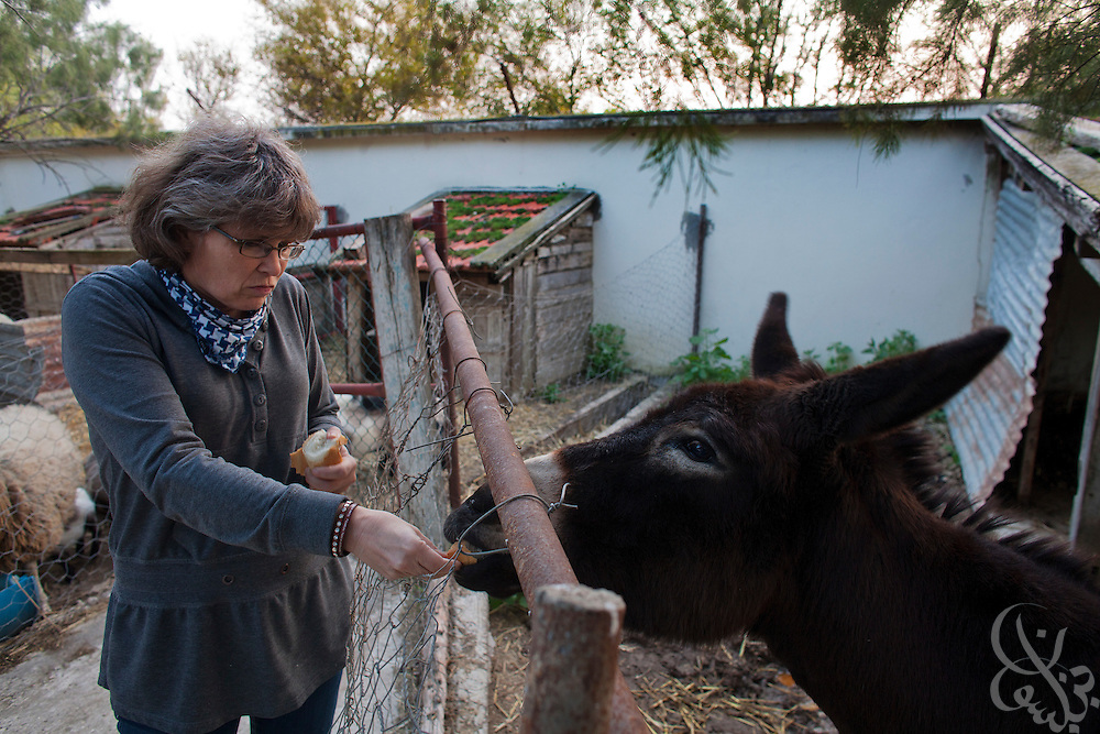 Lucienne Lamouchi feeds her donkey pieces of bread at her restored French colonial estate home March 04, 2012 in the village of Mateur, Tunisia. Lamouchi and her Tunisian husband own and operate a jeans export factory in Tunisia. (Photo by Scott Nelson for Elsevier)