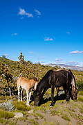 Horses graze at Estancia La Estela, Santa Cruz Region, Argentina.