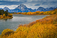Fall colors along the Snake River at Oxbow Bend, below Mount Moran, Grand Teton National Park, Wyoming