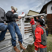 Cowboys at the Falkland Stampede.
