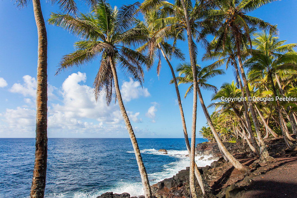 Puna Coast Road, Route 137, Kapoho to Kalapana, The Big Island of Hawaii