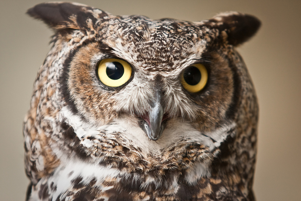Owl Photography Tours