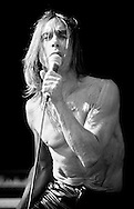 Iggy Pop / V Festival 98, Hylands Park, Chelmsford, Essex, Britain - August 1998.