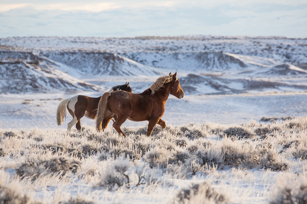 Frigid temperatures frost the sage and mountainsides at the McCullough Peaks Herd Management Area.