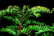 lush green leafs on black background