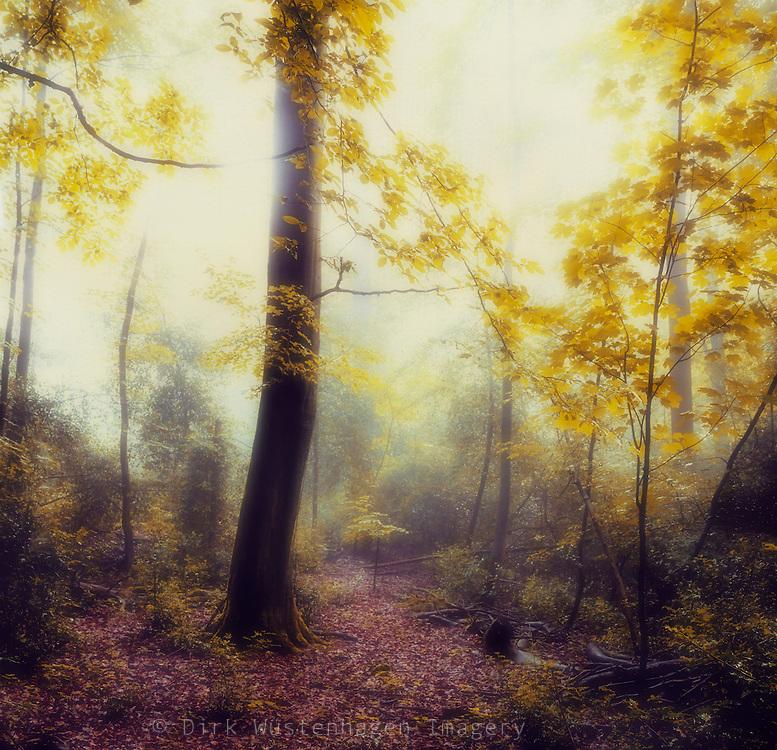 Waldlichtung in Morgendunst und Gegenlicht, Wuppertal, Deutschland