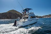 A man on a fishing boat feeds a sea lion while the boat is in motion.