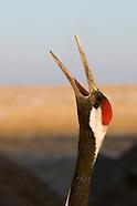 China Birds