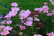 Blooming Purple flower