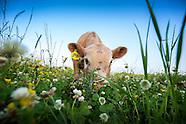Farm + Agriculture