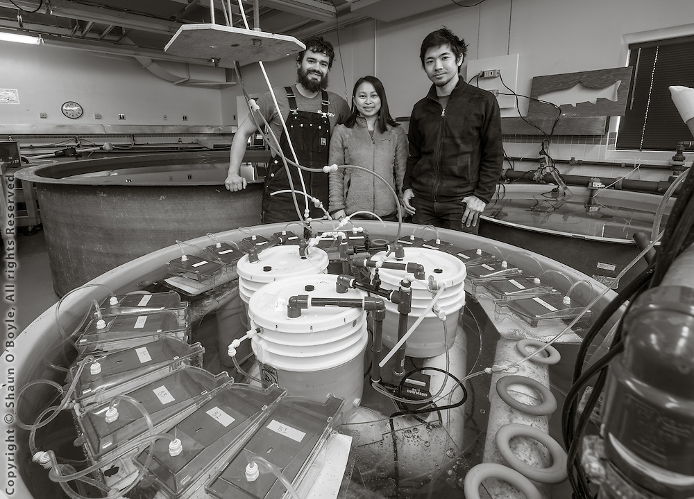 Kevin Johnson, Juliet Wong and Umi Hoshijima in the Crary aquarium at the tank where they are exposing pteropods to water acid levels expected in the not distant future.