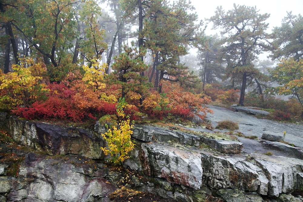Fall Foliage in New Paltz, New York